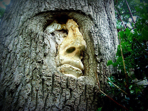faceintree
