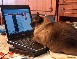 cat reading on computer