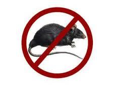 lassa fever - rat borne virus
